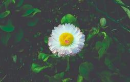 Flor dramática Imágenes de archivo libres de regalías