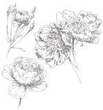 Flor drenada mano Foto de archivo libre de regalías