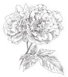Flor drenada mano Fotografía de archivo