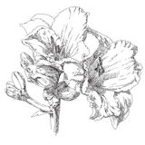 Flor drenada mano Imagen de archivo