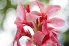 Flor dulce Imagen de archivo