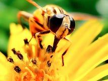 Flor dulce imagen de archivo libre de regalías