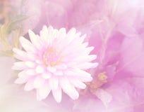 Flor dulce del color en fondo suave del estilo Foto de archivo