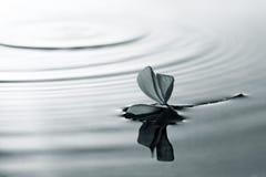 Flor e água Fotos de Stock Royalty Free