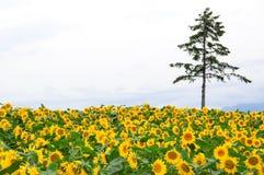 Flor e árvore Fotografia de Stock