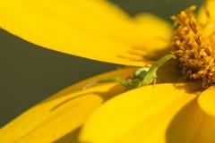 Flor e aranha Fotos de Stock