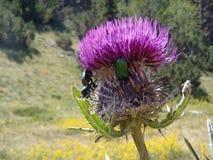 Flor e besouro Imagens de Stock Royalty Free