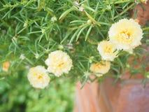 Flor e bloco coloridos no foco seletivo Imagens de Stock