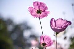 Flor e bokeh e céu foto de stock royalty free