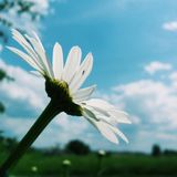 Flor e céu Fotos de Stock