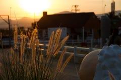 Flor e carneiros da grama Fotografia de Stock Royalty Free