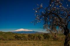Flor e Etna da amêndoa foto de stock royalty free