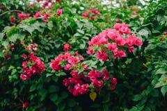 Flor e folha fotografia de stock