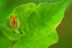 Flor e folha Fotografia de Stock Royalty Free