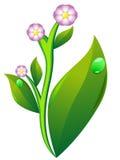 Flor e folha da batata Ilustração do Vetor