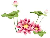 Flor e folhas dos lótus ilustração stock