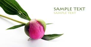 Flor e folhas roxas encantadoras Fotos de Stock Royalty Free