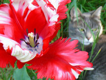 Flor e gato Fotografia de Stock Royalty Free