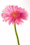 Flor e gotas Fotos de Stock Royalty Free