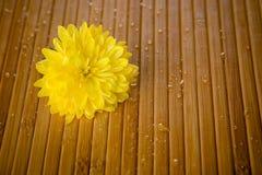 Flor e gotas Fotografia de Stock Royalty Free