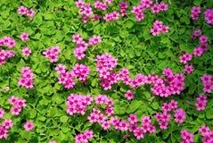 flor e grama Foto de Stock