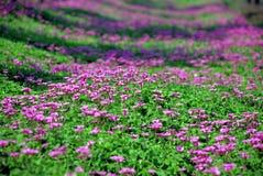 flor e grama Fotografia de Stock Royalty Free