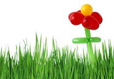 Flor e grama vermelhas Foto de Stock Royalty Free
