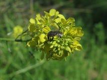 Flor e insecto Fotografía de archivo libre de regalías