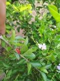 Flor e insecto Fotos de archivo