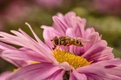 Flor e inseto Foto de Stock
