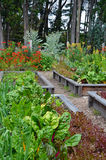 Flor e jardim vegetal Foto de Stock Royalty Free