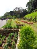Flor e jardins bonitos em Sri Lanka fotos de stock