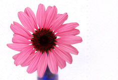 Flor e laço do cone Foto de Stock Royalty Free