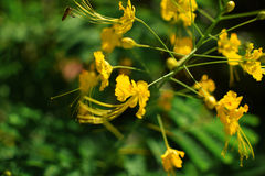 Flor e luz do sol amarelas bonitas Fotos de Stock