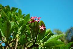 Flor e luz do sol cor-de-rosa bonitas Fotos de Stock
