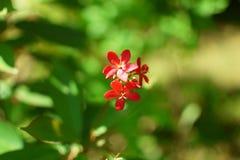 Flor e luz do sol vermelhas bonitas Fotografia de Stock