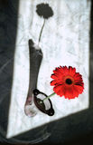 Flor e máscara vermelhas fotos de stock