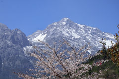 Flor e montanha do sonw Imagem de Stock Royalty Free