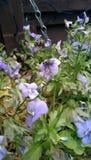 A flor e a mosca Imagem de Stock Royalty Free