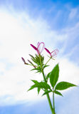 Flor e o céu Foto de Stock