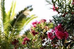 Flor e palma Imagens de Stock