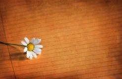Flor e papel sujos Fotografia de Stock