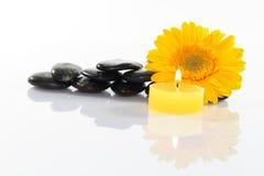 Flor e pedras Fotografia de Stock