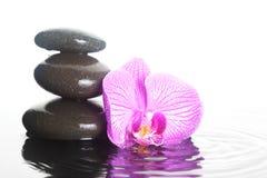 Flor e pedras na água imagens de stock royalty free