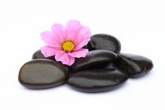 Flor e pepples foto de stock royalty free