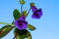 Flor e plano fotografia de stock