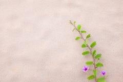 A flor e a planta roxas decoram na praia Fotos de Stock