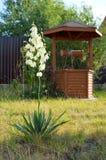 Flor e poço Fotografia de Stock Royalty Free