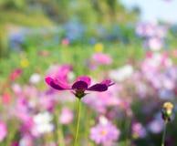 Flor e por do sol escuro Fotografia de Stock Royalty Free