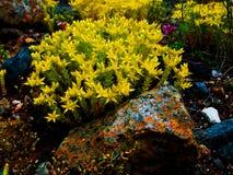 Flor e a rocha Foto de Stock Royalty Free